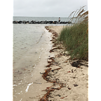 Yorktown Beach mapping-post KT 2017 image